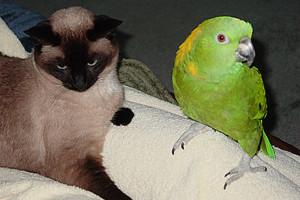 Keoke And Mei Mei