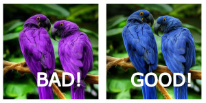 Hyacinth Macaws Bad Photoshop